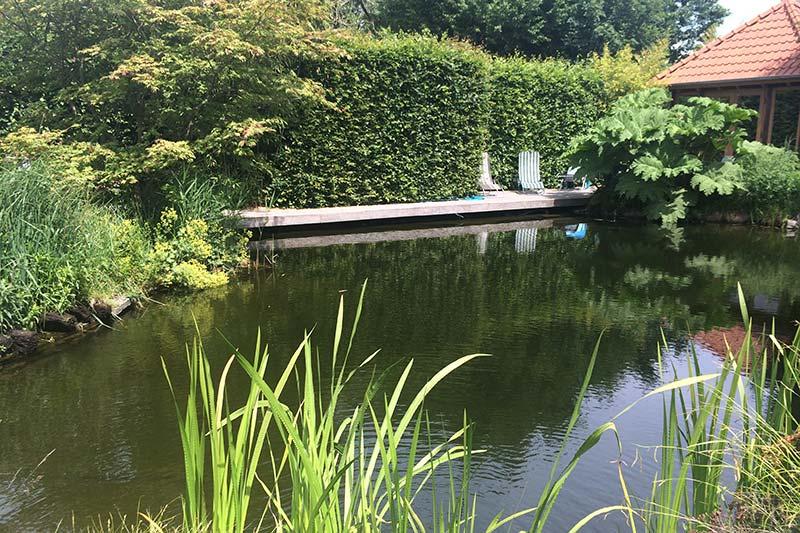 Schwimmteich mit Bepflanzung in Viersen
